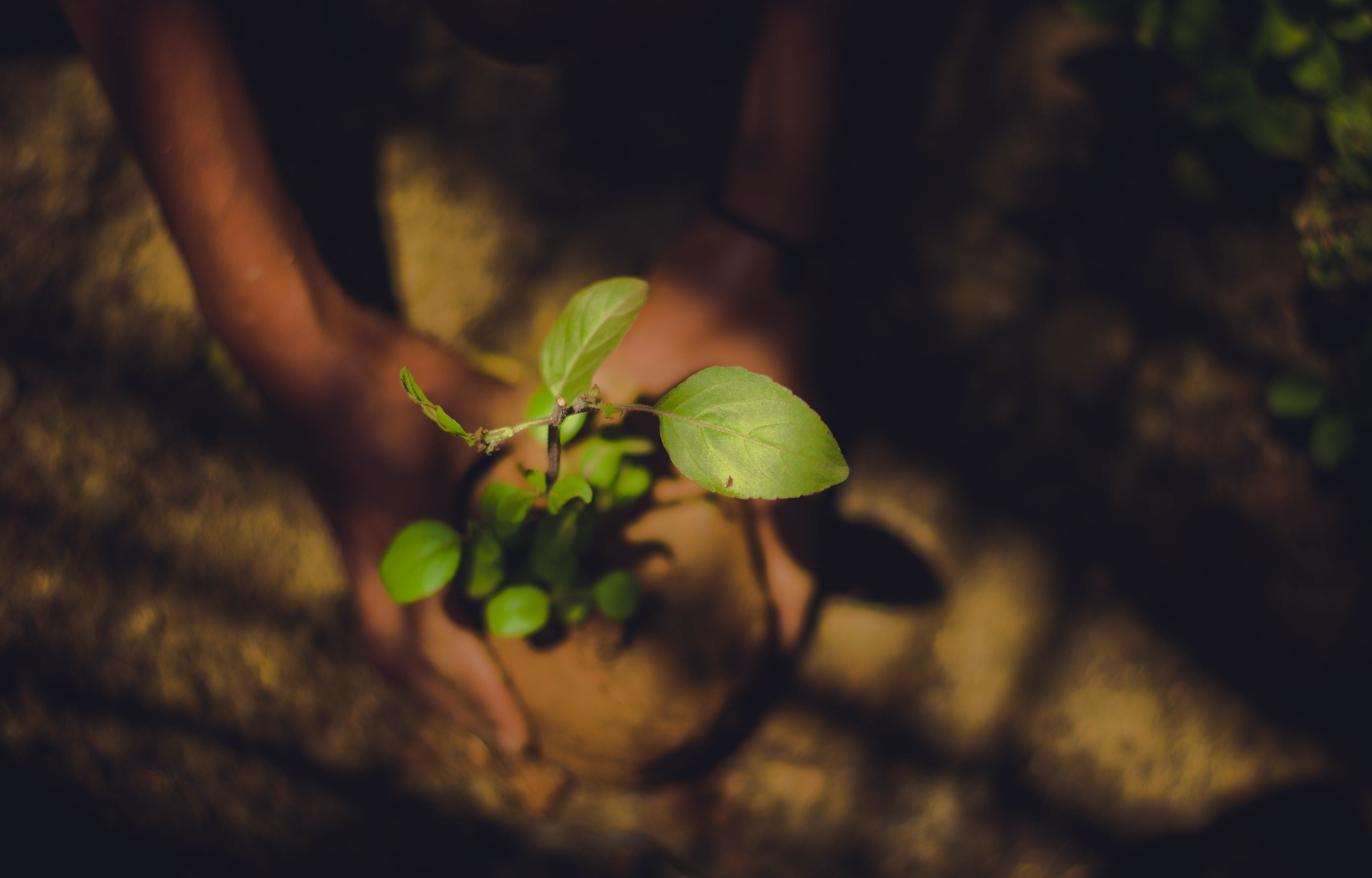 nature based solutions, like this person planting a tree, are key in solving climate change