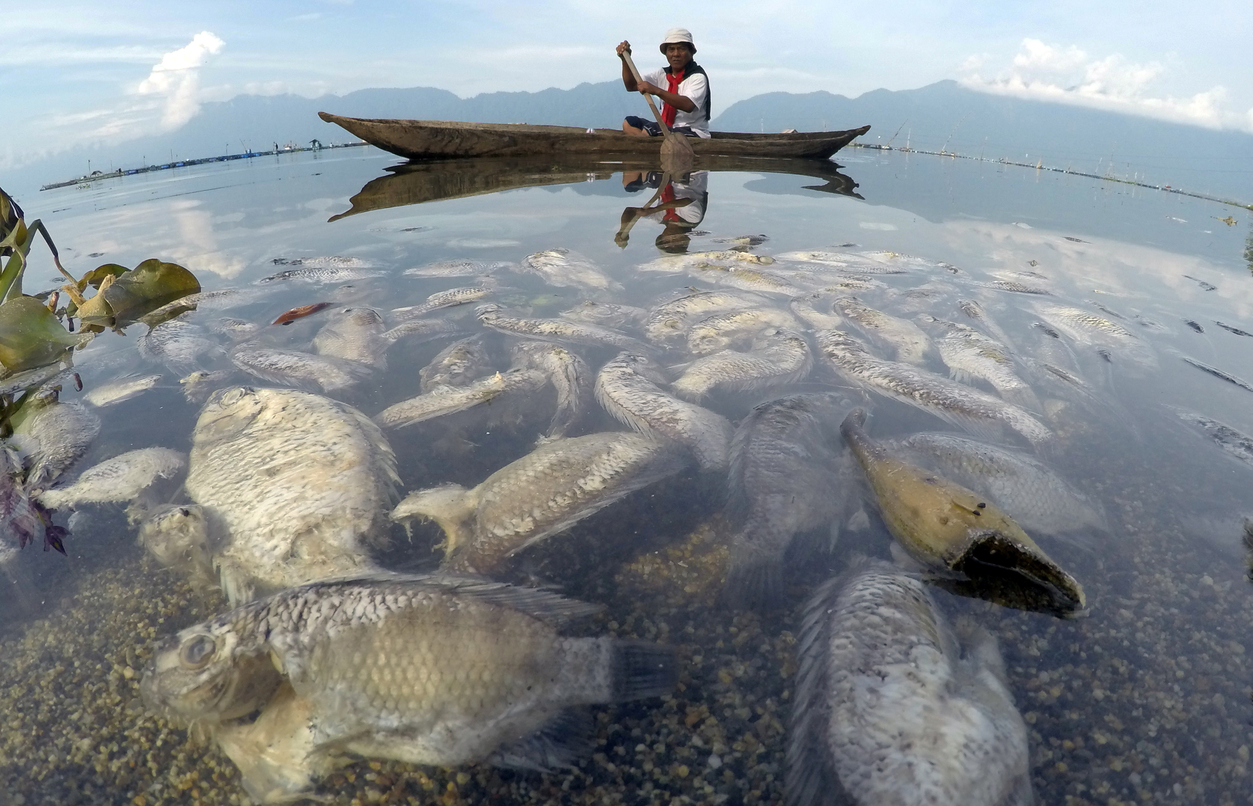 A fisherman paddles a wooden boat as dead fish are seen at Maninjau lake in Agam regency,