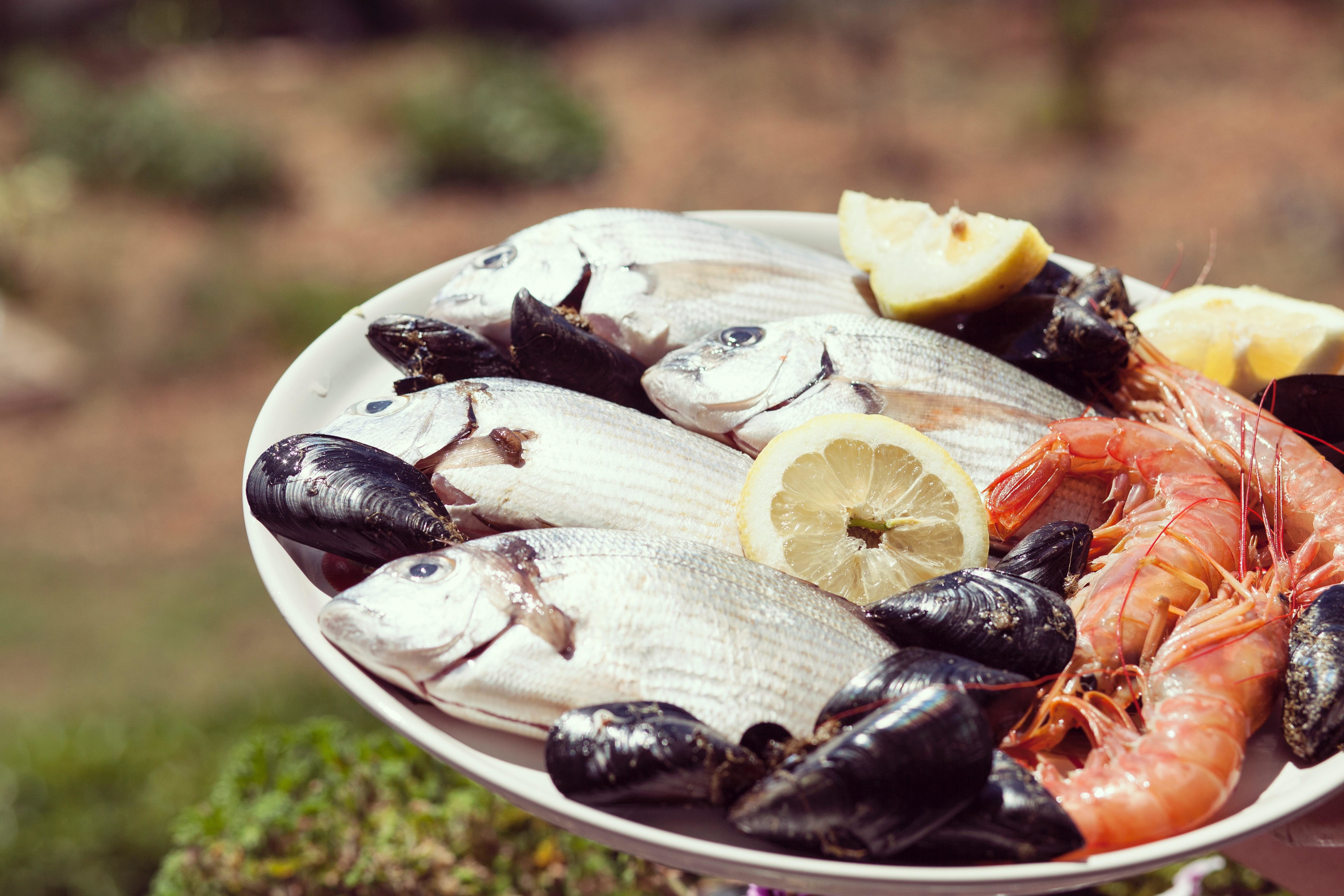 A plate of seafood - including fish, shrimp and mussels.