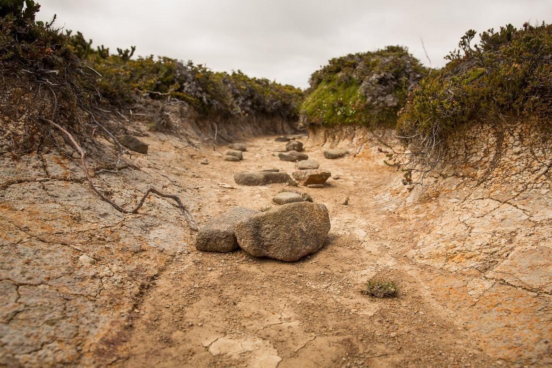 A dry creek bed in Hartz Mountains, Tasmania, Australia.
