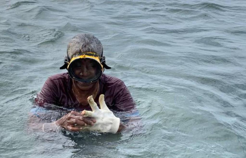 A seaweed harvester off the coast of Ramanathapuram, India, March 8, 2020.