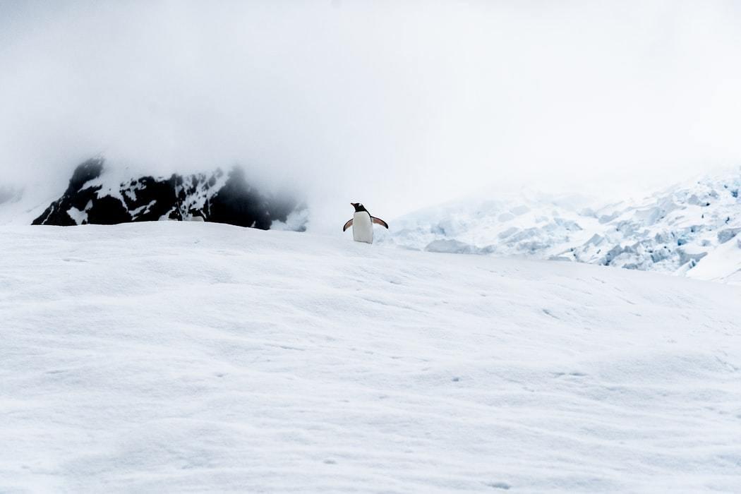 image of a penguin in Antarctica