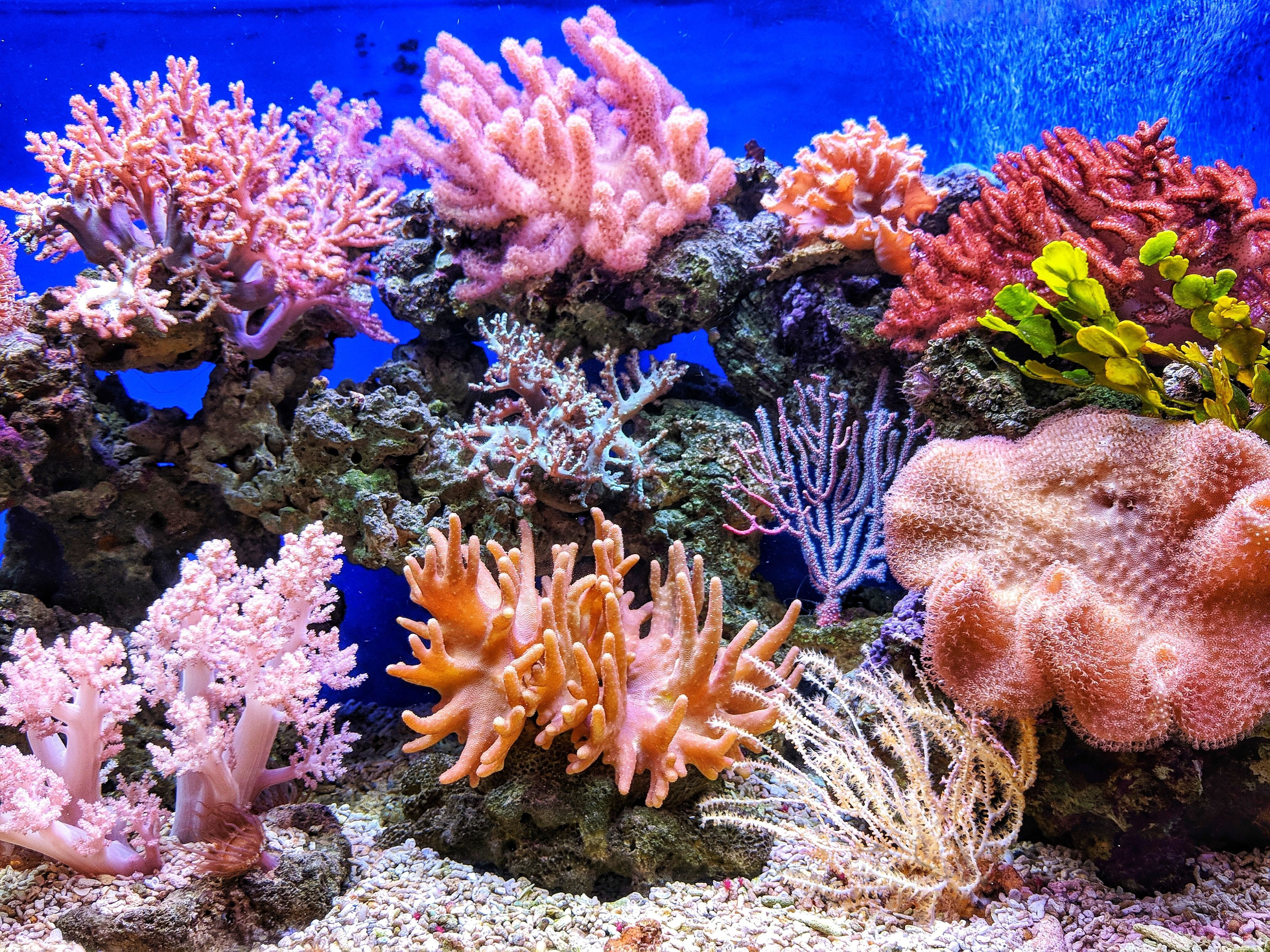 A colourful coral reef in the ocean.