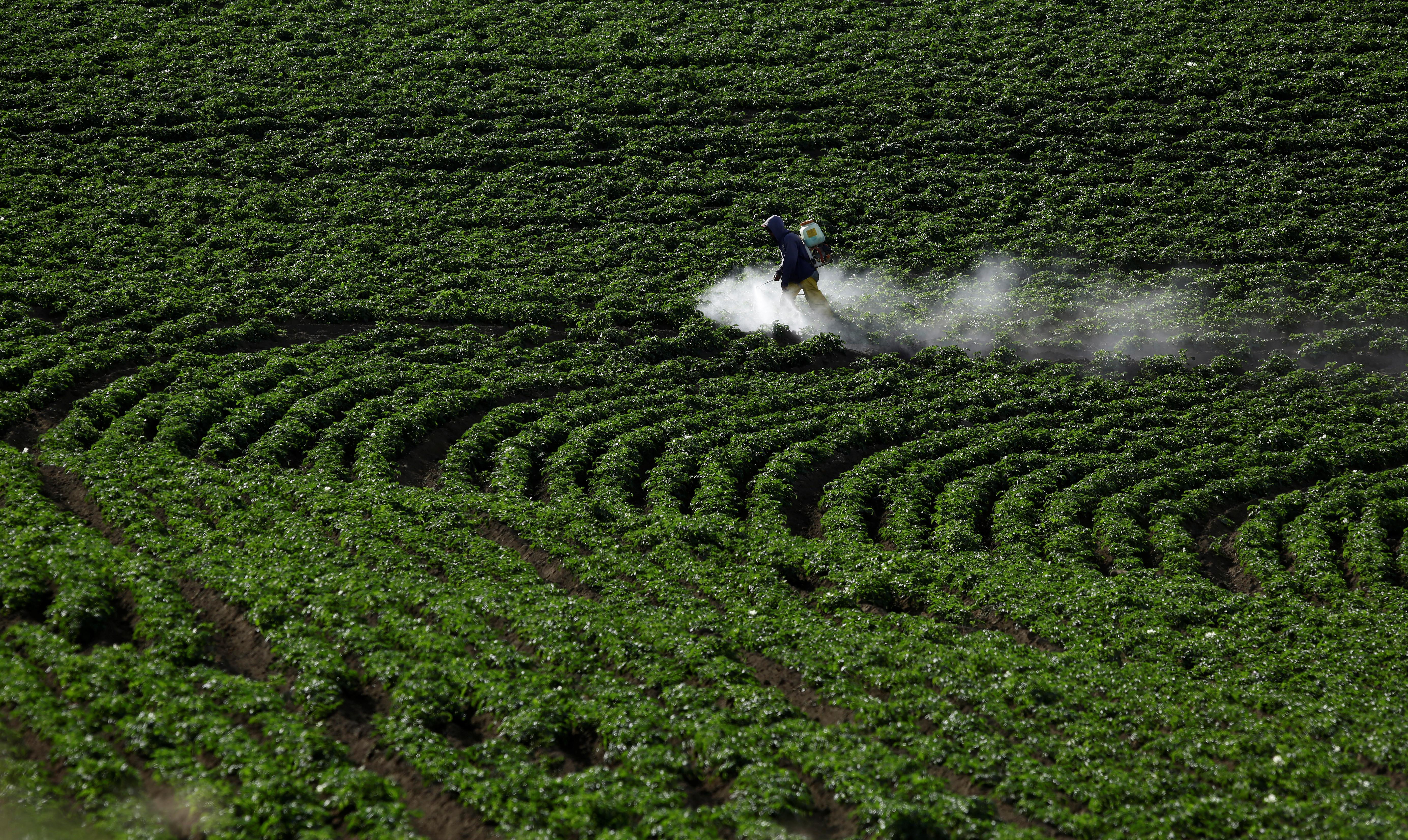 A farmer sprays a mixture of fertilizer and pesticide at a potato plantation in Cartago, Costa Rica April 27, 2018. REUTERS/Juan Carlos Ulate - RC13AF61E030