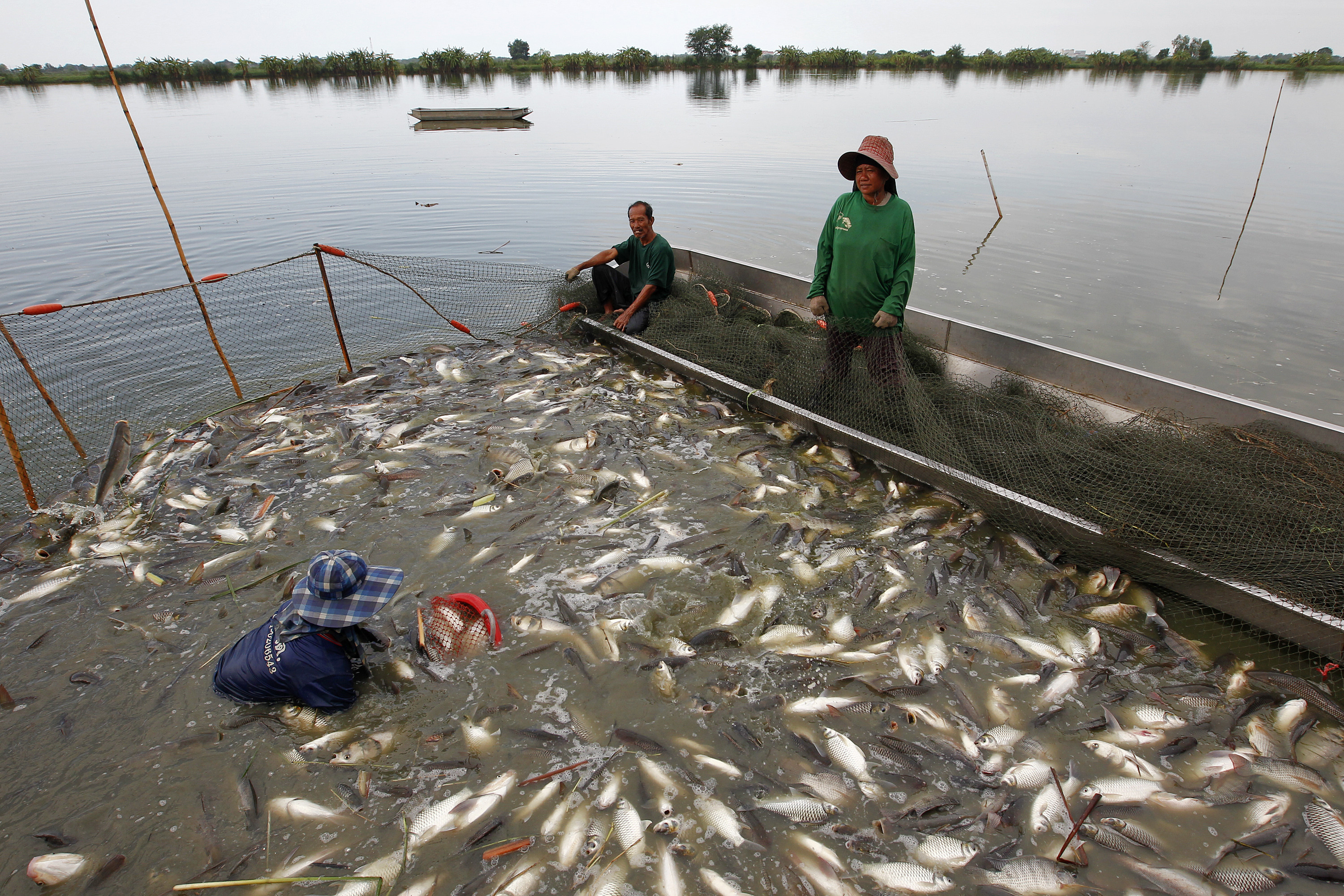 image of a freshwater fish farm