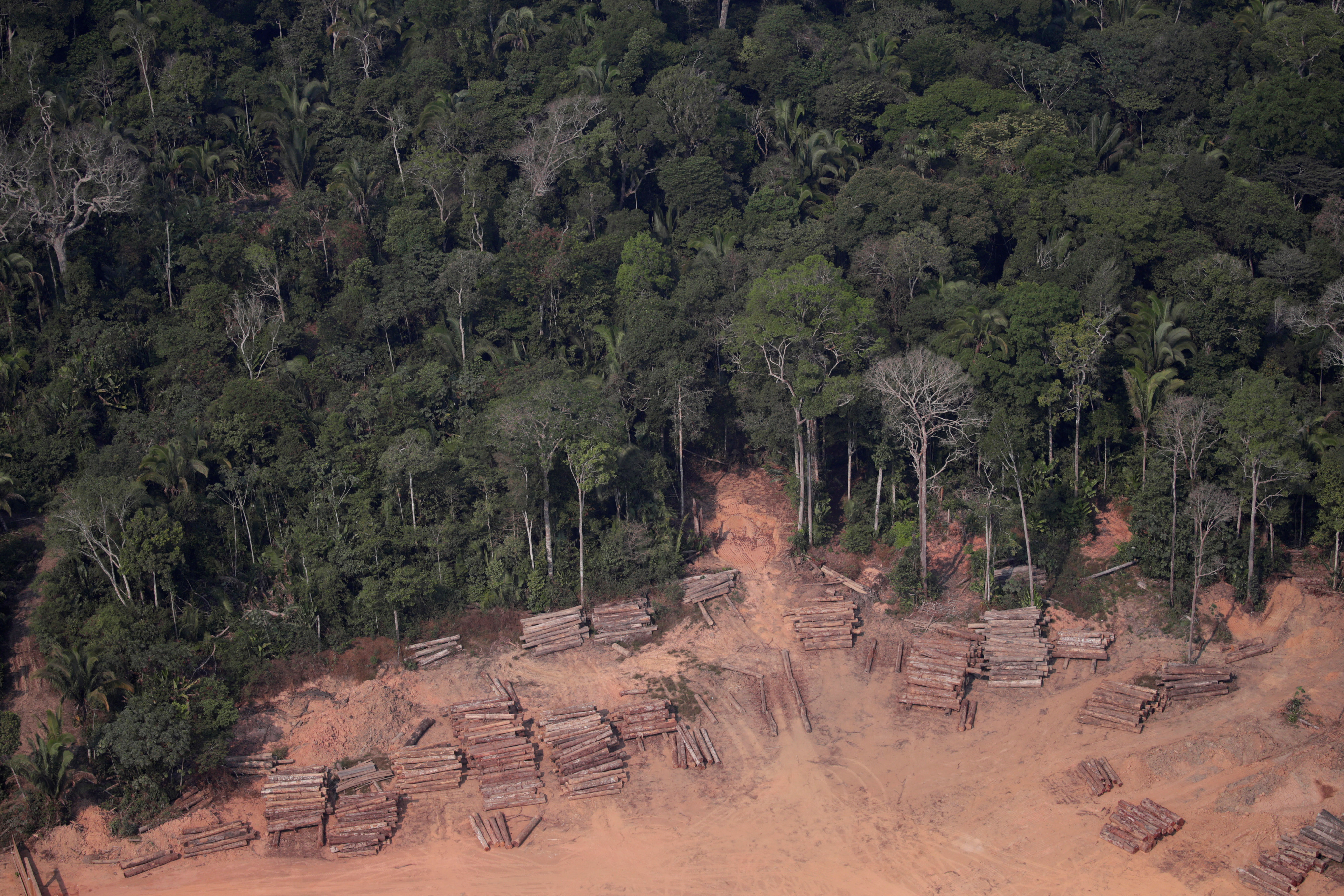An aerial view of logs illegally cut from Amazon rainforest are seen in sawmills near Humaita, Amazonas State, Brazil August 22, 2019. REUTERS/Ueslei Marcelino - RC1B4AADB7D0