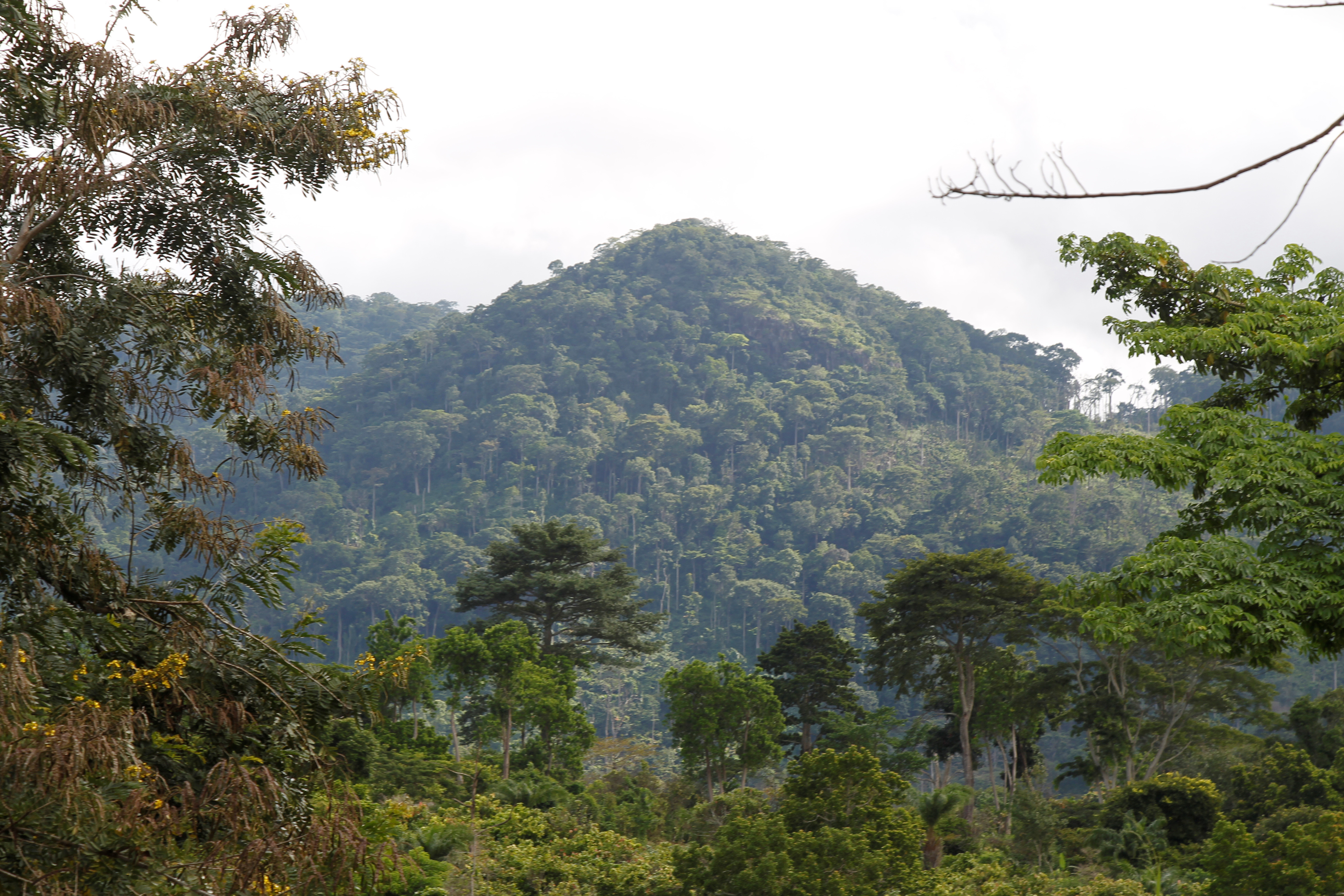 A view of Mont Peko National Park in Duekoue department, western Ivory Coast August 2, 2016. Picture taken August 2, 2016. REUTERS/Luc Gnago - S1AETZRNVPAB