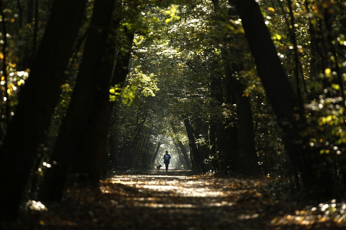 A woman jogs with her dog through a park during a sunny autumn day in central Sofia October 14, 2014.  REUTERS/Stoyan Nenov (BULGARIA - Tags: SOCIETY ENVIRONMENT) - GM1EAAE1G5401