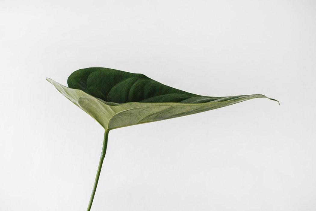 A close-up photo of a leaf.