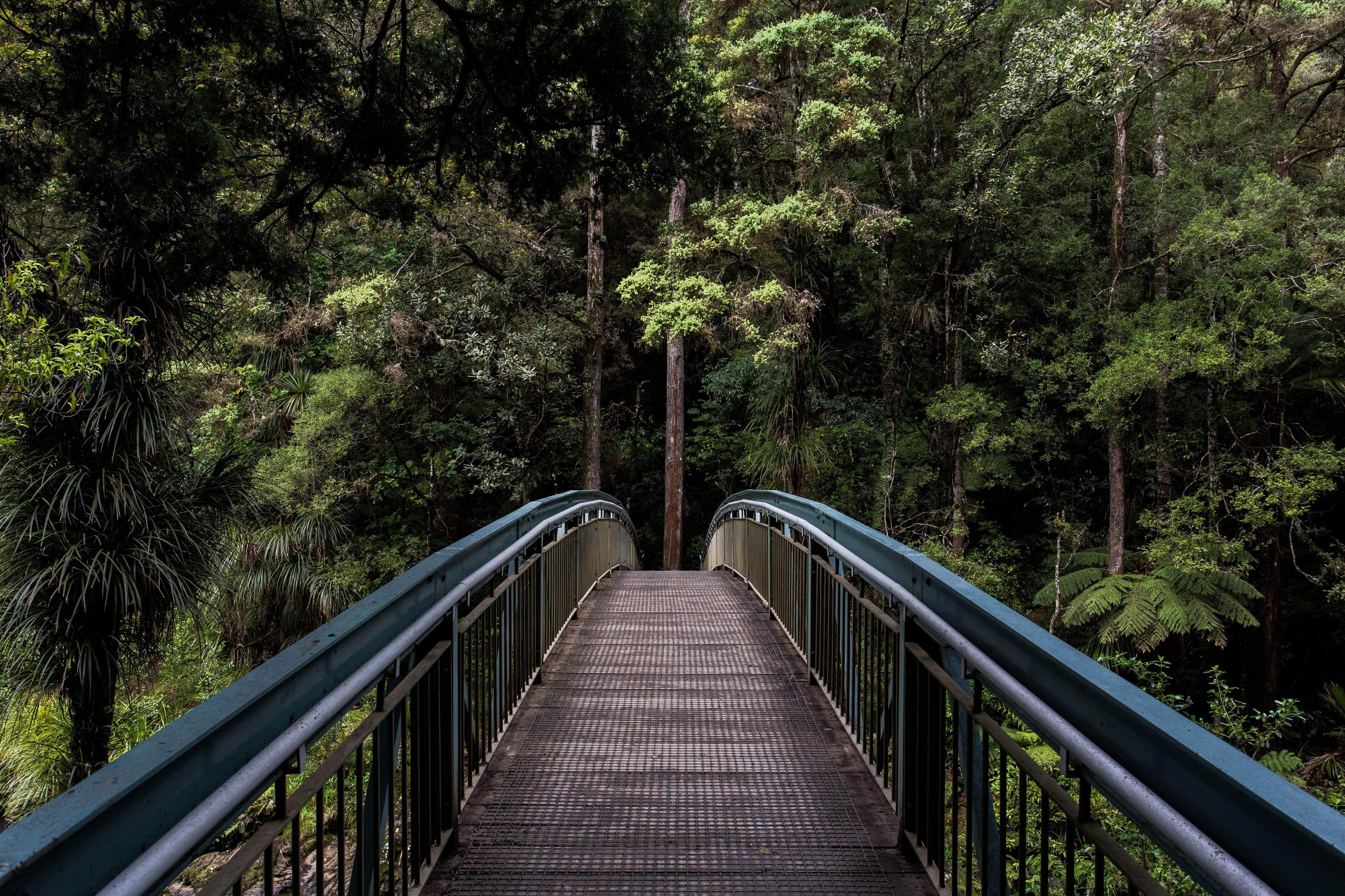 Whangarei Falls footbridge, New Zealand.