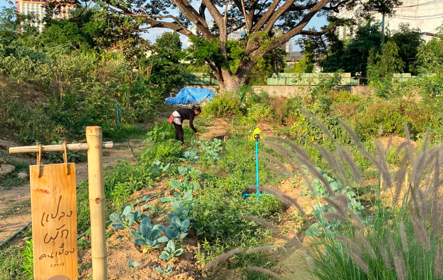 a picture of the community garden with a woman tending to plants