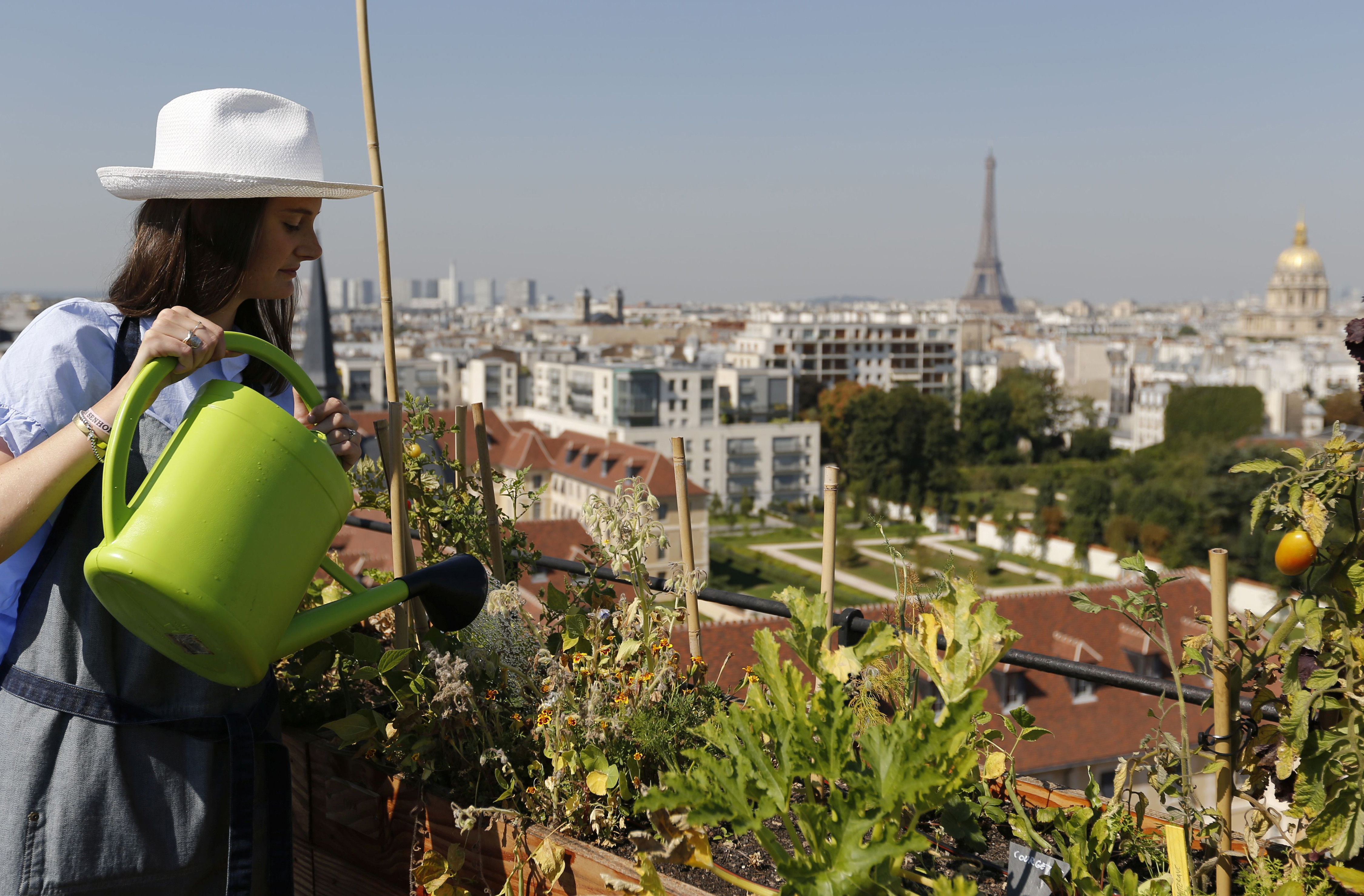 Charlotte Arnoux, recruitment officer and first-time gardener, waters plants on the 700 square metre (7500 square feet) rooftop of the Bon Marche, where the store's employees grow some 60 kinds of fruits and vegetables such as strawberries, zucchinis, mint and other herbs in their urban garden with a view of the capital in Paris, France, August 26, 2016.  REUTERS/Regis Duvignau  - LR1EC8Q1AH2O9