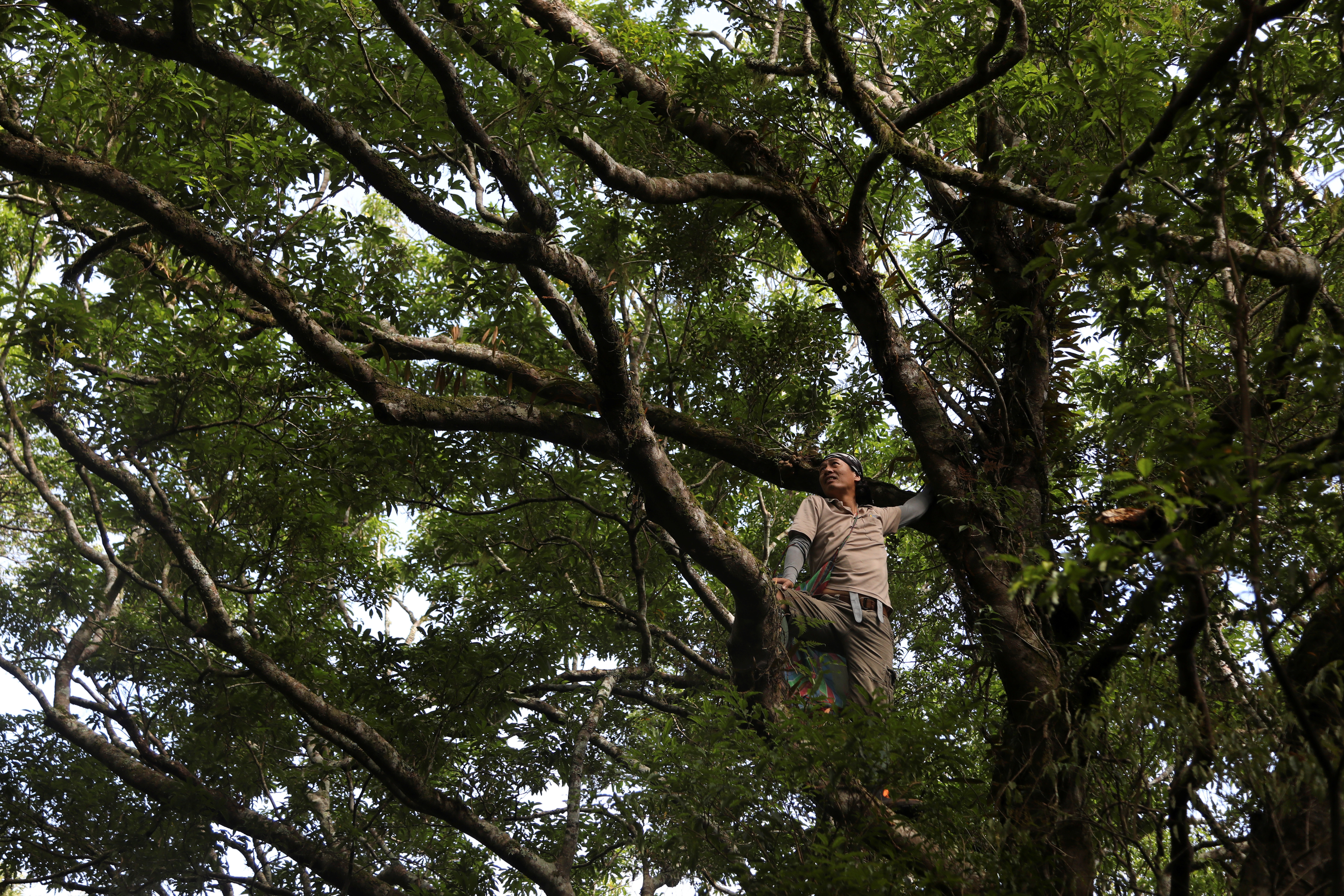 A man poses whilst climbing a tree
