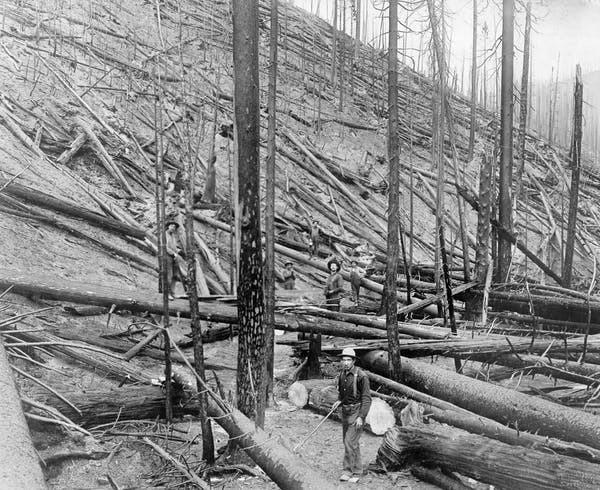 Le grand incendie de 1910, qui a tué 78 pompiers dans l'Idaho (sur la photo) et au Montana a marqué le début d'un demi-siècle de gestion des forêts axé sur la suppression du feu.