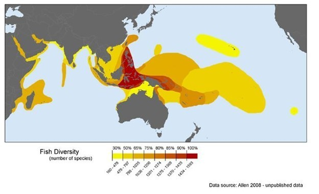 The Coral Triangle has more coral fish diversity than anywhere in the world.