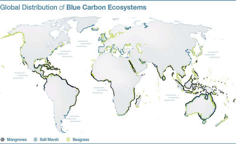 Blue Carbon ecosystems
