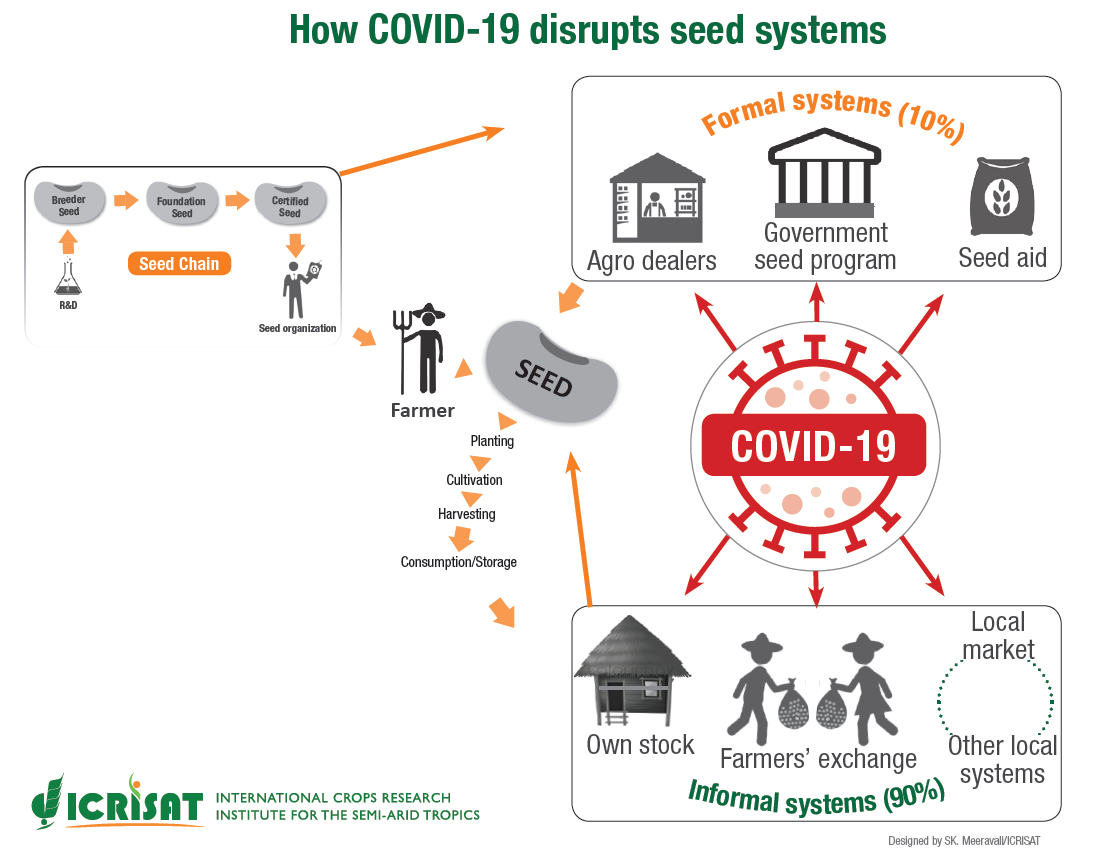 How COVID-19 disrupts seed systems