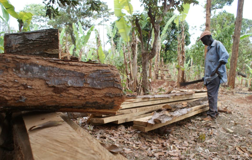 A farmer looks at felled timber on his farm in Ilulua, western Kenya, September 27, 2019.