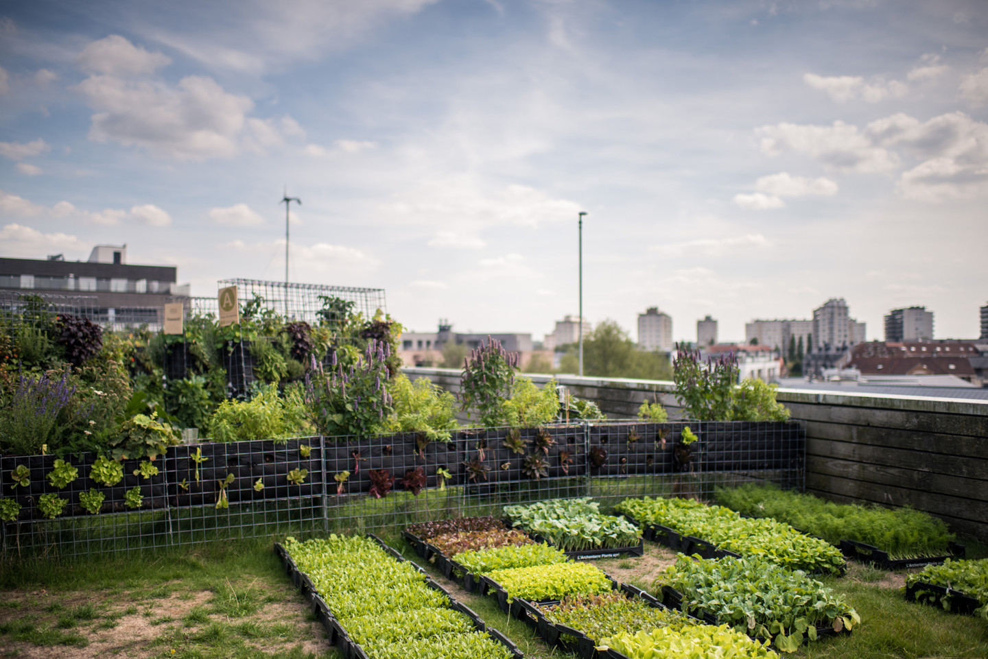 rooftop allotments are shown in an urban setting