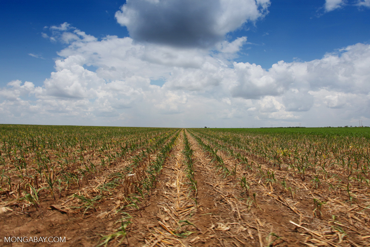 image of a corn field in Columbia