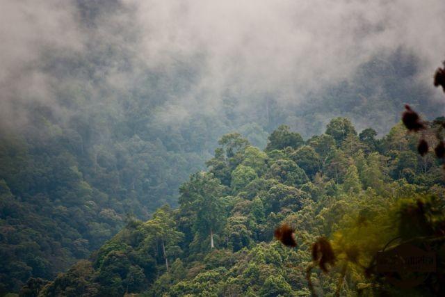Fog over the forest in Kerinci-Seblat National Park.
