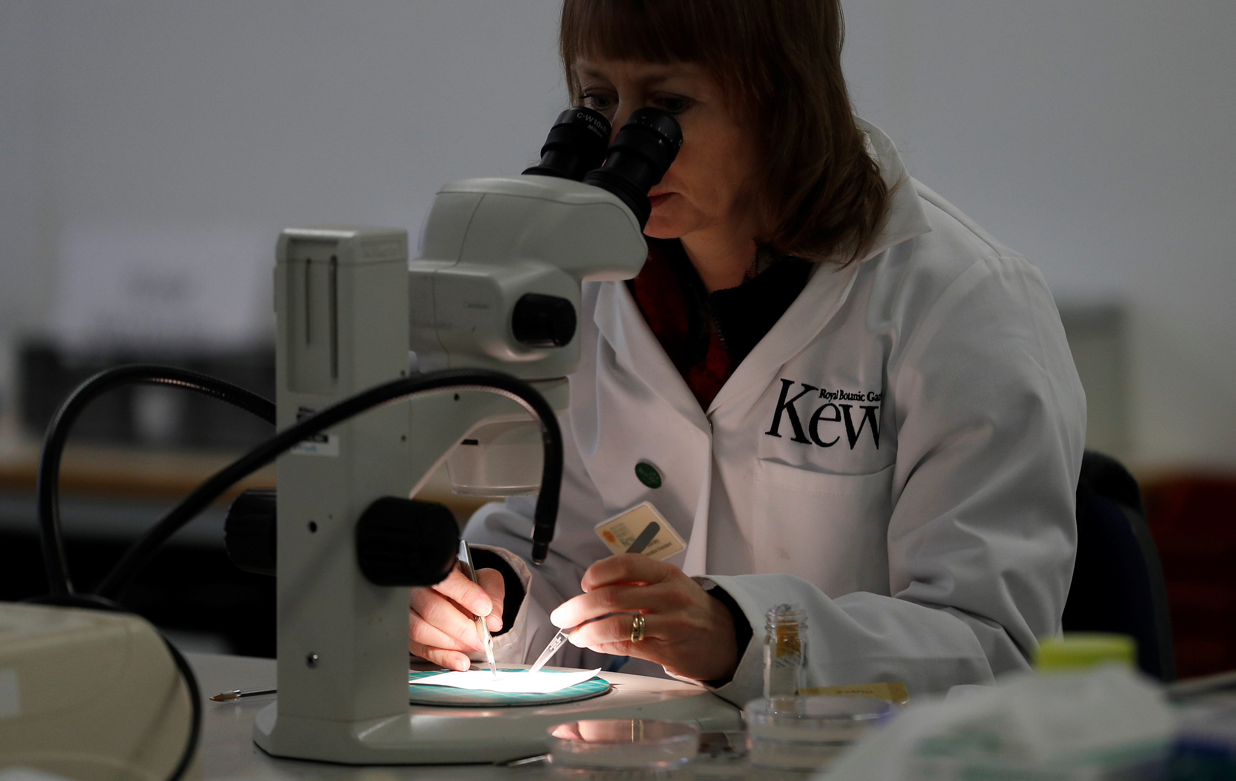 Seed processing assistant Frances Stanley prepares plant seeds for storage at Kew Millennium Seed Bank, in Wakehurst, southern Britain February 7, 2020.  REUTERS/Peter Nicholls - RC2RVE98LZD4