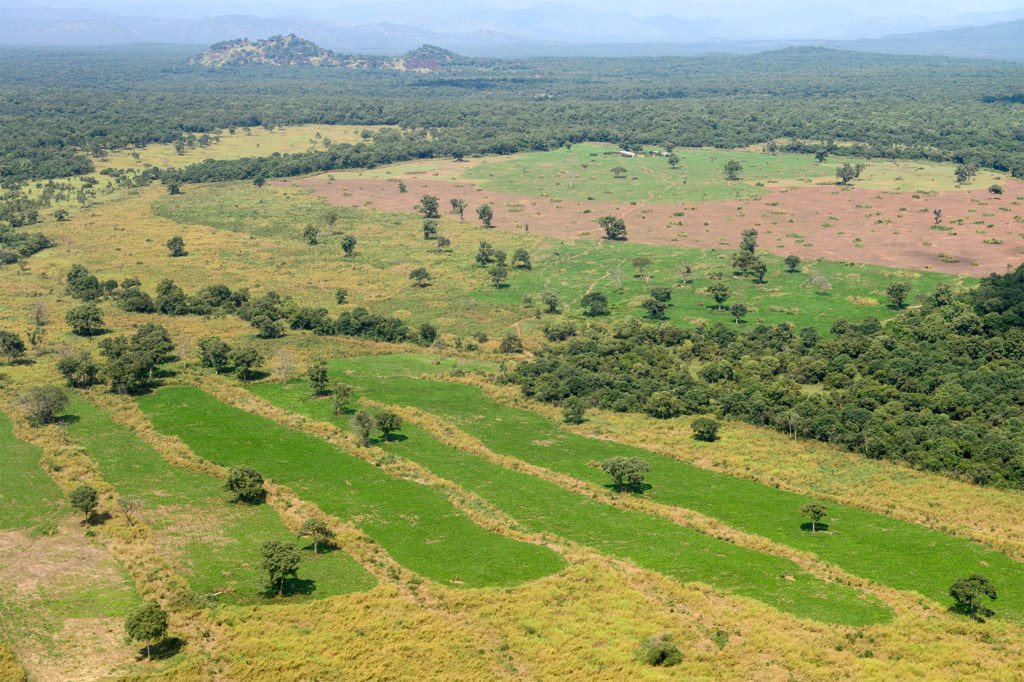 Deforestation near Gambela, Ethiopia.