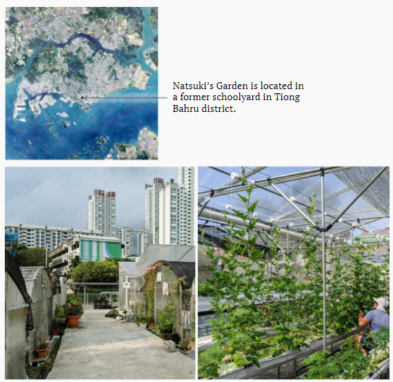 Building a better greenhouse for urban farms in tropical climates.