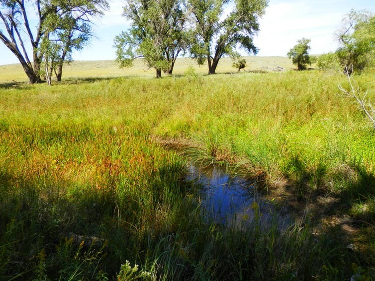 The Arikaree River in eastern Colorado is an intermittent stream that supports brassy minnow, a species of concern in the state. Ellen Wohl, CC BY-NC