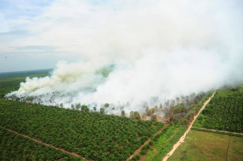 A wildfire is seen from a Ministry of Environment and Forestry helicopter over Kubu Raya, near Pontianak, West Kalimantan, Indonesia August 25, 2016, in this photo taken by Antara Foto.