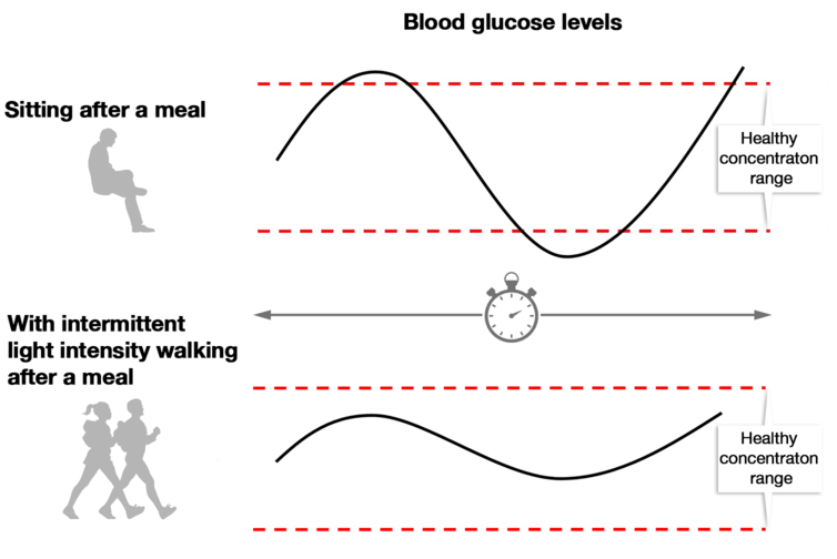 Hypothetical data illustrating the effects of sitting versus intermittent walking on glucose control in response to a meal