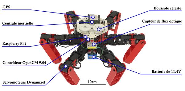 Le robot AntBot et l'ensemble de l'électronique et des capteurs bio-inspirés qu'il embarque.