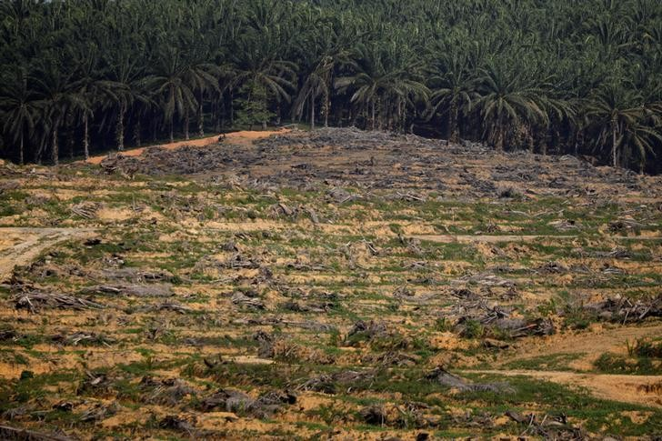 Land that has been cleared is pictured at an oil palm plantation in Johor, Malaysia February 26, 2019. Picture taken February 26, 2019.  REUTERS/Edgar Su