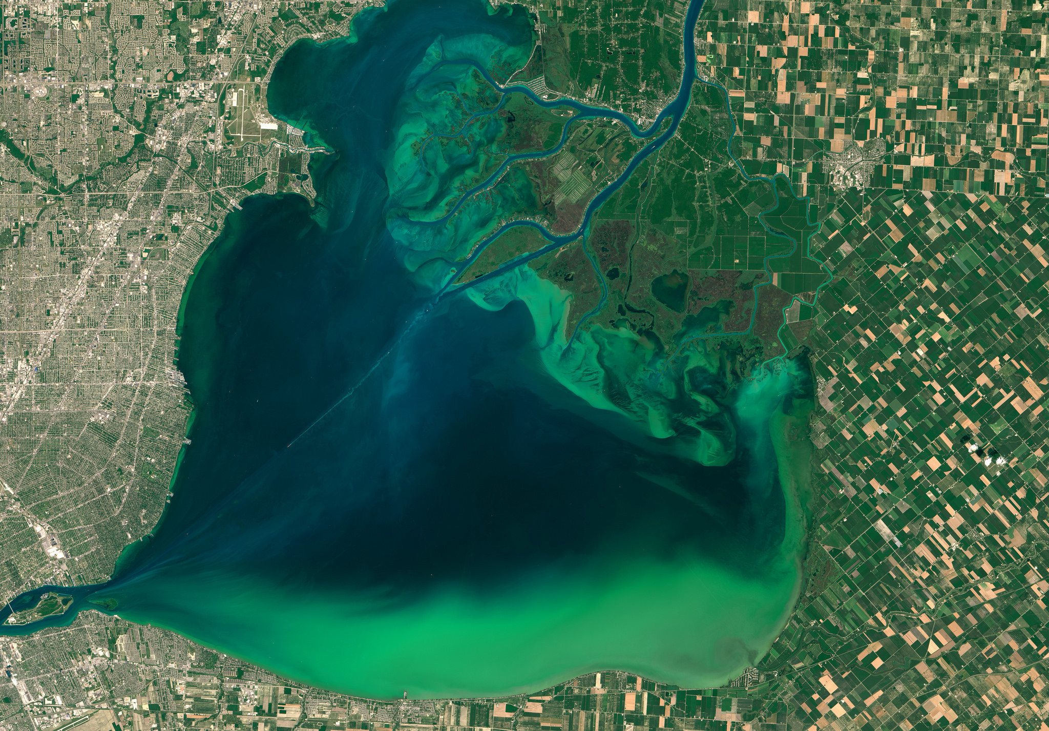 An algal bloom seen in Lake St. Clair, between Michigan and Ontario, in 2015