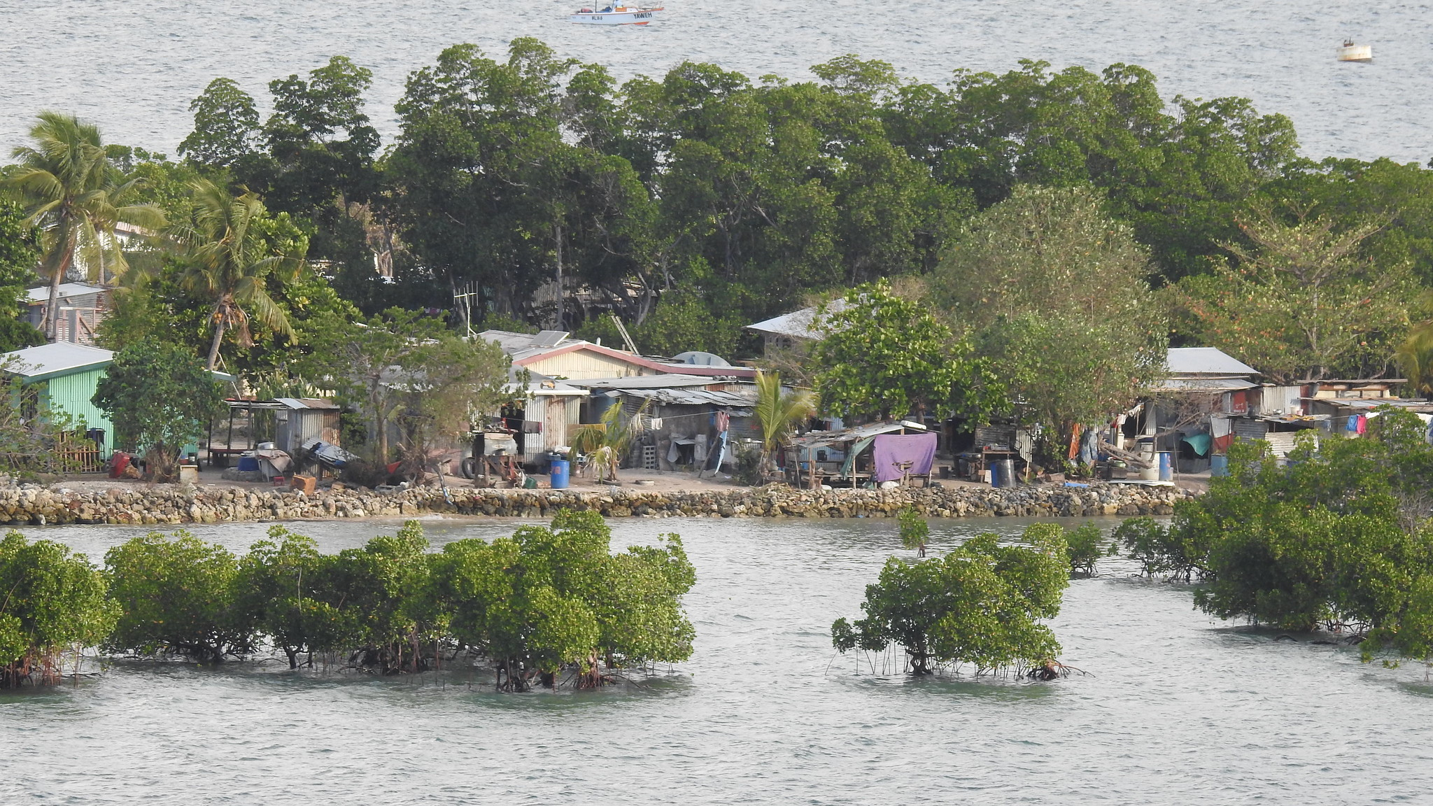 Mangroves protect communities in Fiji from strong waves and winds.