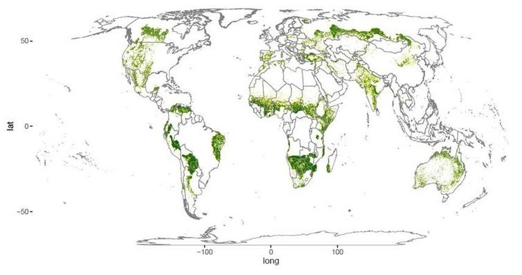 The world's drylands: forested areas shown in green; non-forested areas in yellow.