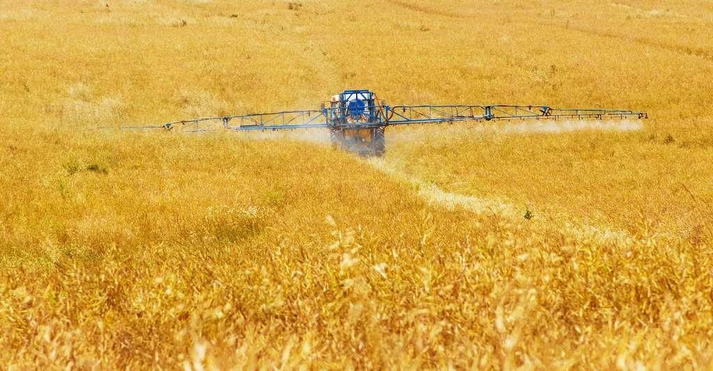 Pour les chercheurs de l'université de Munich (Allemagne), l'agriculture est responsable du déclin marqué des insectes depuis quelques années. Pourtant, elle dépend énormément des capacités de pollinisation de ces mêmes insectes.
