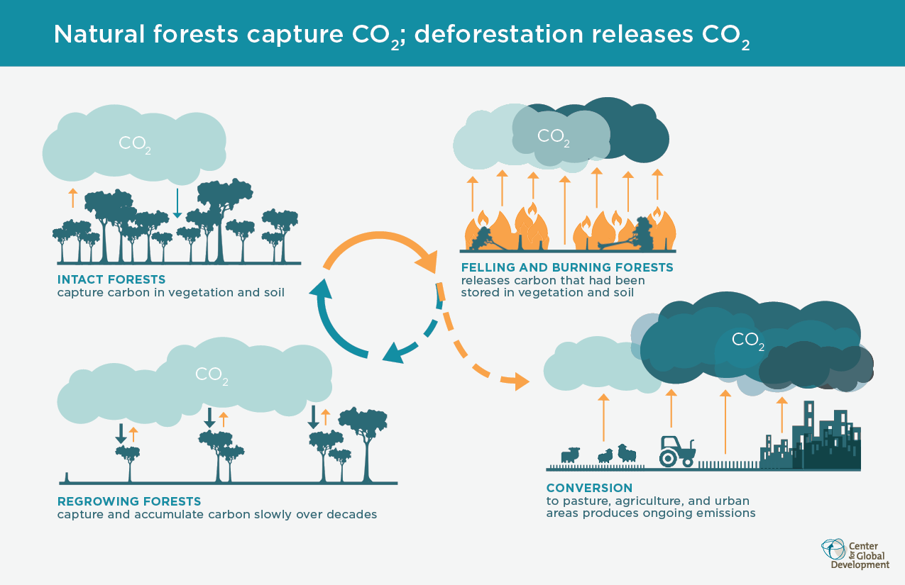 Q Amp A Why Saving Our Forests Should Be A Global Priority