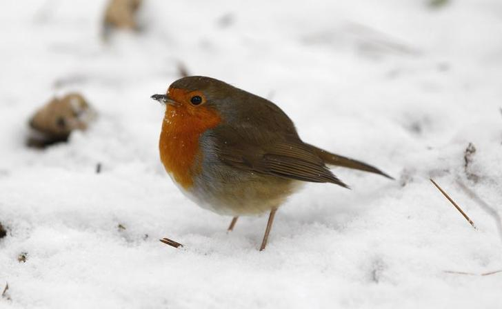 Research suggests robins use quantum physics to navigate on long migrations.