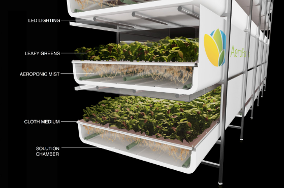 Plants grown using the aeroponics technique do not require soil or sunlight