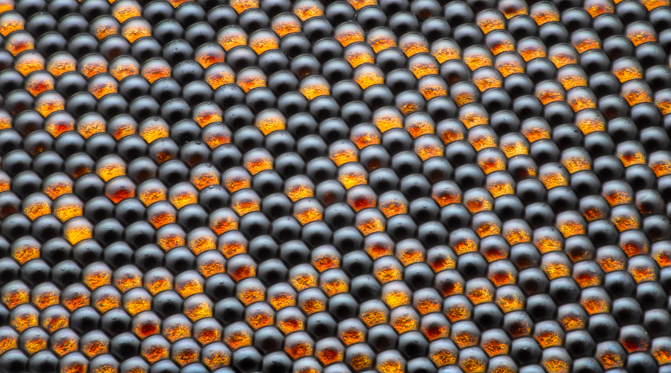 Housefly compound eye pattern