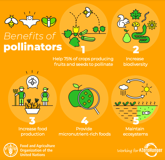 an info graphic explaining the benefits of pollinators