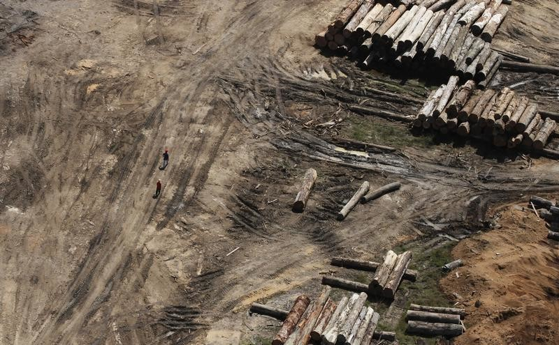 Workers walk past piles of logs cut illegally from Amazon rainforest trees at a sawmill near the city of Morais Almeida, Para state, June 27, 2013. The Amazon rainforest is being eaten away at by deforestation, much of which takes place as areas are burnt by large fires to clear land for agriculture. Initial data from Brazil's space agency suggests that destruction of the vast rainforest - the largest in the world - spiked by more than a third over the past year, wiping out an area more than twice the size of the city of Los Angeles. If the figures are borne out by follow-up data, they would confirm fears of scientists and environmental activists who warn that farming, mining and Amazon infrastructure projects, coupled with changes to Brazil's long-standing environmental policies, are reversing progress made against deforestation. Environmental issues will be under the spotlight as a United Nations Climate Change Conference opens in Warsaw, Poland on November 11. Picture taken on June 27, 2013.  REUTERS/Nacho Doce (BRAZIL  - Tags: ENVIRONMENT POLITICS AGRICULTURE) - TB3E9BB1HHB67