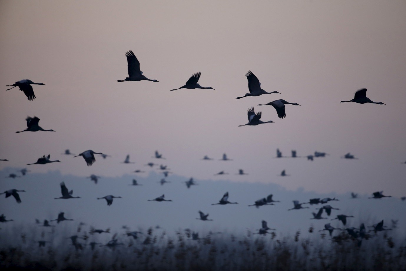 Migrating cranes fly over the Hula Lake Ornithology and Nature Park in northern Israel
