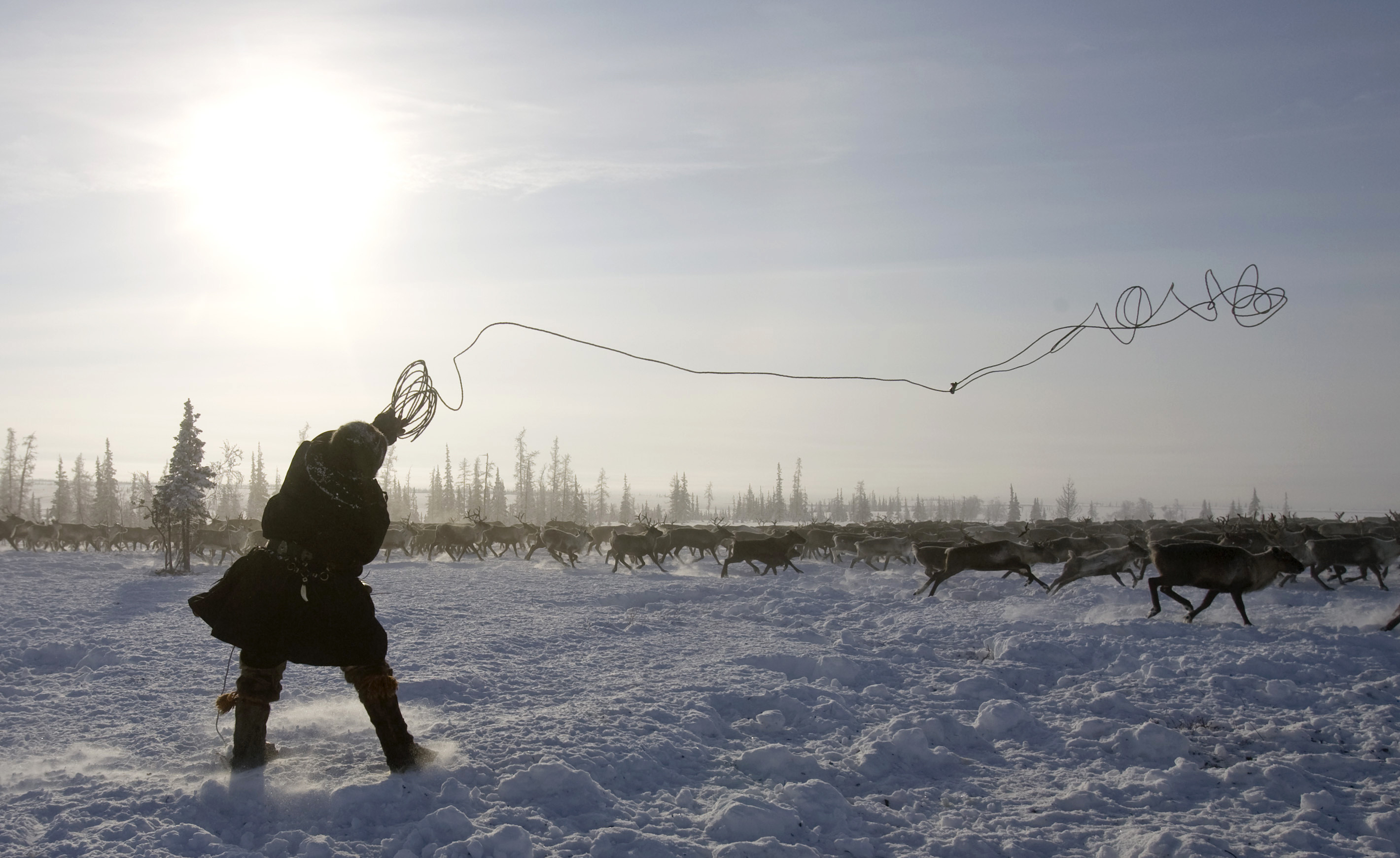 A deer-keeper throws his lasso in the Tundra region near the village of Kharsaim, some 2,000 km northeast of Moscow, February 29, 2008.  REUTERS/Vasily Fedosenko