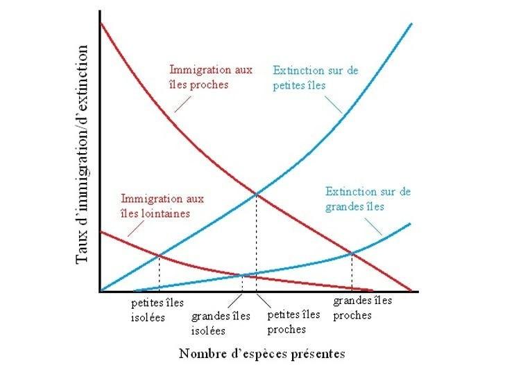 Illustration de la théorie de l'île biogéographique de R. MacArthur et E. Wilson, basée sur deux prédictions : les taux d'immigration sont plus élevés vers les îles proches d'une source de colonisateurs, et les taux d'extinction des espèces sont élevés sur les petites îles. Le modèle montre qu'il y a un plus grand nombre d'espèces dans les grandes îles proches que dans les petites îles isolées.