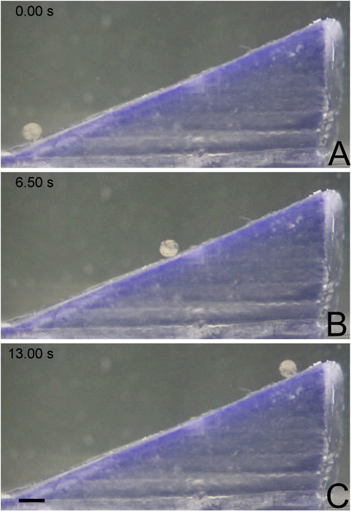 MANiAC climbing up a 25° incline. (A) MANiAC (lower left) starts at the bottom of the incline and climbs (B) to the top (C) in 13 s. Scale bar is 0.5 mm.