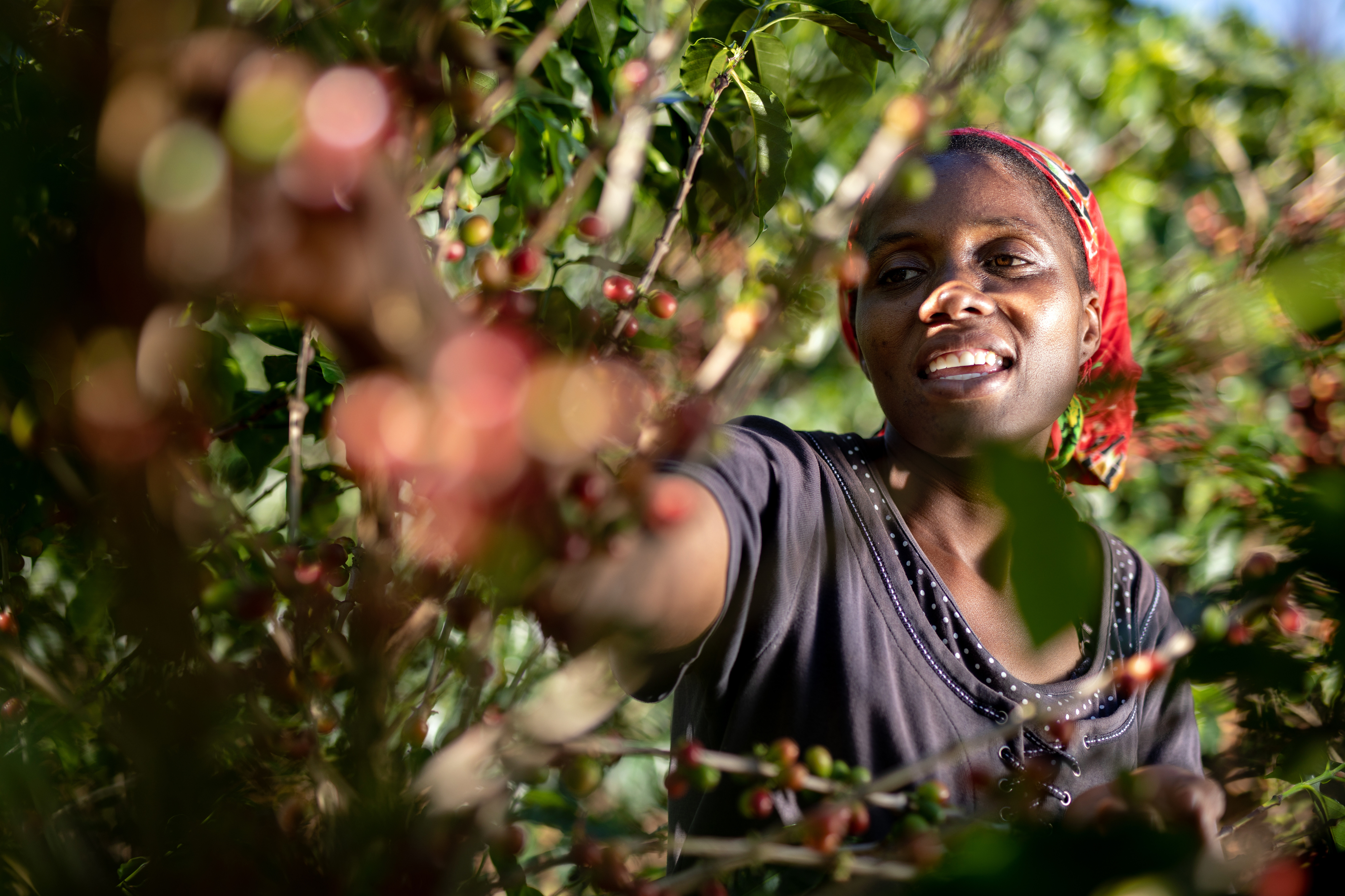 Jesca Kagai, a 35years old farmer, is harvesting coffee cherries in her farm situated in the Honde Valley, eastern Zimbabwe, near the border with Mozambique, on June 19th, 2018. After being voted second best coffee producer in Mutasa district, and 5th in Manicaland province as a whole, she recently joined the AAA Academy, a fair trade program Nespresso sets up to revive coffee culture in Zimbabwe.