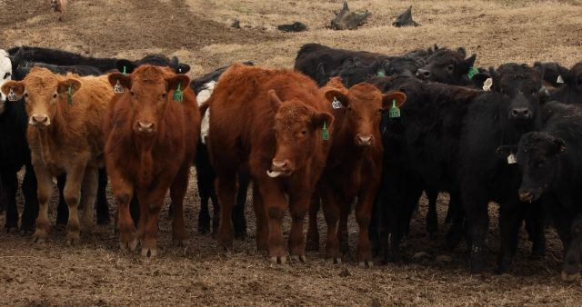 Beef comprise a significant portion of agricultural emissions.