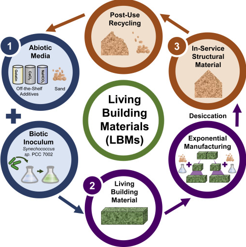 The Life Cycle of Living Building Materials